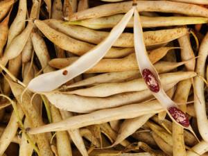 бобови шушулки